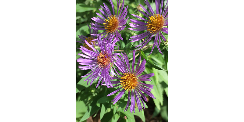 ASTERS, The Nature Nut