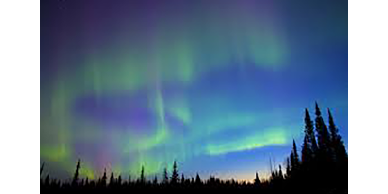 NORTHERNLIGHTS, The Nature Nut